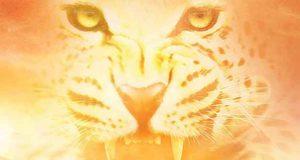 Der Legionär: Im Schatten des Leoparden