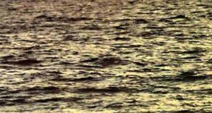 Ein Fall für Fuchs & Haas: Sechs am Strand