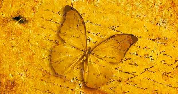 Buchempfehlung Solange Es Schmetterlinge Gibt Ein Liebesroman