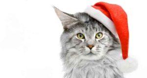 Weihnachtspunsch und Weihnachtskater